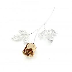 Rosa argentata con petali...
